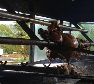 Piggy pig on Puerto Rico's Pork Highway