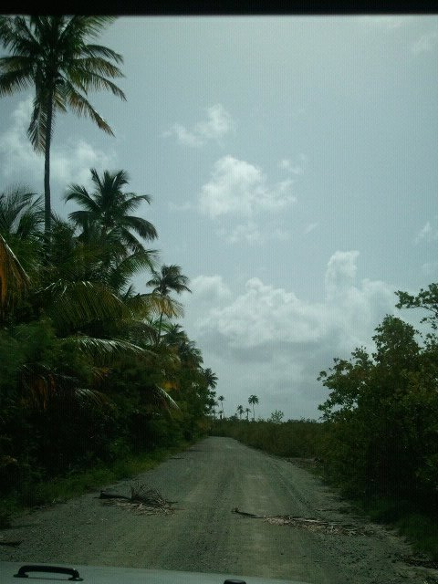 All About Car Rental In San Juan Puerto Rico And Isla Vieques